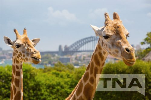 Sydney Bus Hire - Taronga Zoo