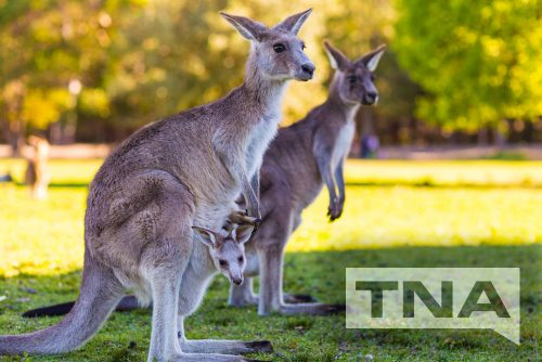 Coach Hire and Buss Charters to and From Currumbin Wildlife Sanctuary