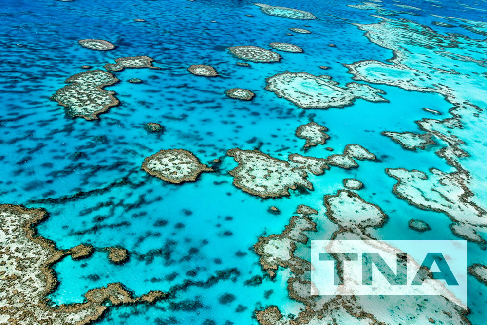 Great Barrier Reef Bus Hire and Coach Charters